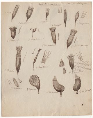 [Botanical drawings and letters]. Jacob Whitman Bailey.