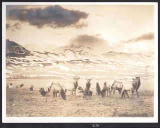 Livingston, Montana and Yellowstone Photo Album]. Joseph F. Scherieble, W. S. Berry, photog